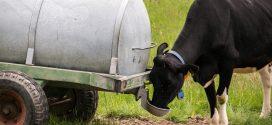 krave goveda napajanje voda dnevne potrebe