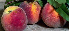 breskve šupljikavost lišća breskve faze razvoja hladnjača rokovi breskva evropski voćnjak azijska buba