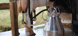 nova oprema pesak prostirka metabolizam krava