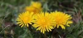 zdravlje iz prirode biljke indikatori