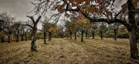 zimsko prskanje potkornjaci jesenje plavo prskanje voćnjak starenje zimsko tretiranje rak korena jesenje prskanje pregled štetočina plavo prskanje podmladjivanje starijih zimsko tretiranje zimski radovi