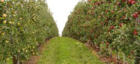 medjukultura obrada zemljišta voćnjak dobre - voćnjaci biostimulatori