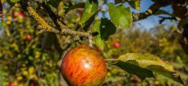 manjak elelmenata jabuke napada zabrana aktivnih materija