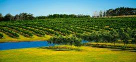 pametno navodnjavanje sadnice odvodnjavanje suša agrotehničke suša u voćnjaku voćnjak