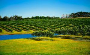sadnice odvodnjavanje suša agrotehničke suša u voćnjaku voćnjak