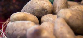 krompir GMO prstenasta trulež krompir bolesti najbolje krompir sorte krompira crna pegavost krompira krompir u plasteniku krompir kvalitet rod krompira