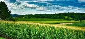 izbor hibrida silaža hibrid kukuruz borealis setva kukuruza fosfor kako plodored kukuruza folijarna prihrana rastvorom