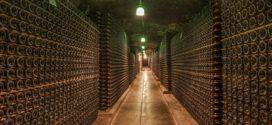 vino faze zrenja