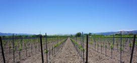 djubrenje vinograd humifikacija morava crna pegavost vinogradarski boja zemljišta