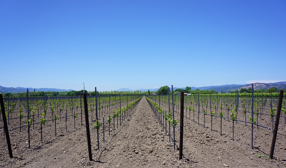 djubrenje vinograd humifikacija morava crna pegavost vinogradarski