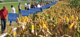 gustina setve kukuruza