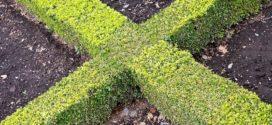 šimšir sadnja zelena ograda