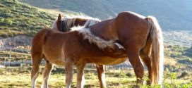 ždrebećak konji neki nega konja konj
