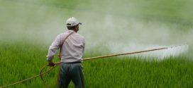 pesticid herbicidi fitotoksičnost pesticidi