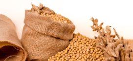 soja sorte gustina setve ekstruder soja krečnjak rešava kombajn u soji soja izvoz soja suša soja gmo
