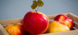 jabuke pesticidi rezidua berba pravi termin interpoma klupske sorte
