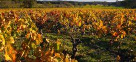 eska bolest fitoplazma listova formulacije djubrenja pirsova bolest blago vinove loze bordovska kolje kao potpora vinova loza u