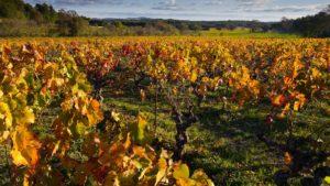 eska bolest fitoplazma listova formulacije djubrenja pirsova bolest blago vinove loze bordovska kolje kao potpora
