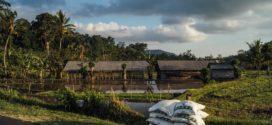 Sintetičko azotno đubrivo đubrenje pred setvu osnovno đubrenje prihrana pšenice