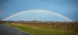 vinograd đubrenje vinograd uticaj vinogradi klimatske vinograd leti