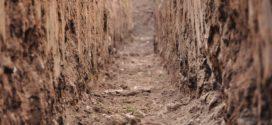 fosfor u zemljištu