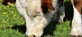 vitamin a mlekara u vlasništvu uredba o
