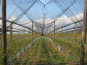 pre sadnje sadnja voćnjaka ipard stubaste jabuke zaštita voćnjaka jesenja sadnja savetovanje novi sad đubrenje mladih zasada mladi voćnjaci sertifikacija sadnog