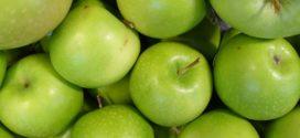 tehnologija proizvodnje izvoz jabuka