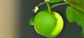 podloga jabuke biljni hormoni savetovanje kalemljenje pepelnica jabuke kalemljenje načini
