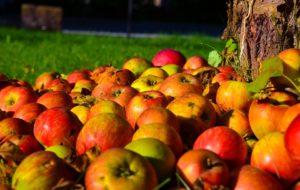 nevreme srbija izvoz gorka radovi đubrivo savetovanje voćara jabuke njihovo čuvanje jabuke u svetu jabuka rano
