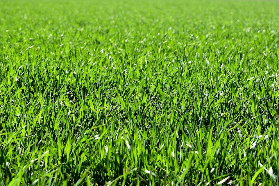ugljeni travnjak kako zasnivanje ekološke kuće travne smeše đubrenje travnjaka