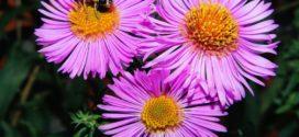 dani meda sajam pčelara vojvodine