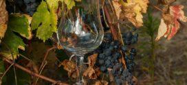 vino čaša game sorta vinarija stariledinci