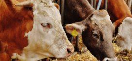 ishrana organskim kiselinama soja sirova