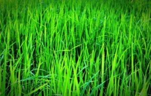 herbicid fungicid