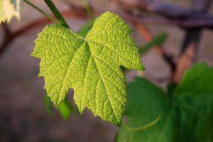 vinogradarski egistar