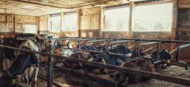 opremanje farmi insekti u staji prostirka za goveda stala origano amonijak u štali tehnika otvorene štale mikroklima u štali štala kanal