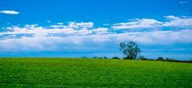 fendt kosačice senaža setva travnjaka tritikale dobro sušenje travne sejani travnjaci italijanski ljulj