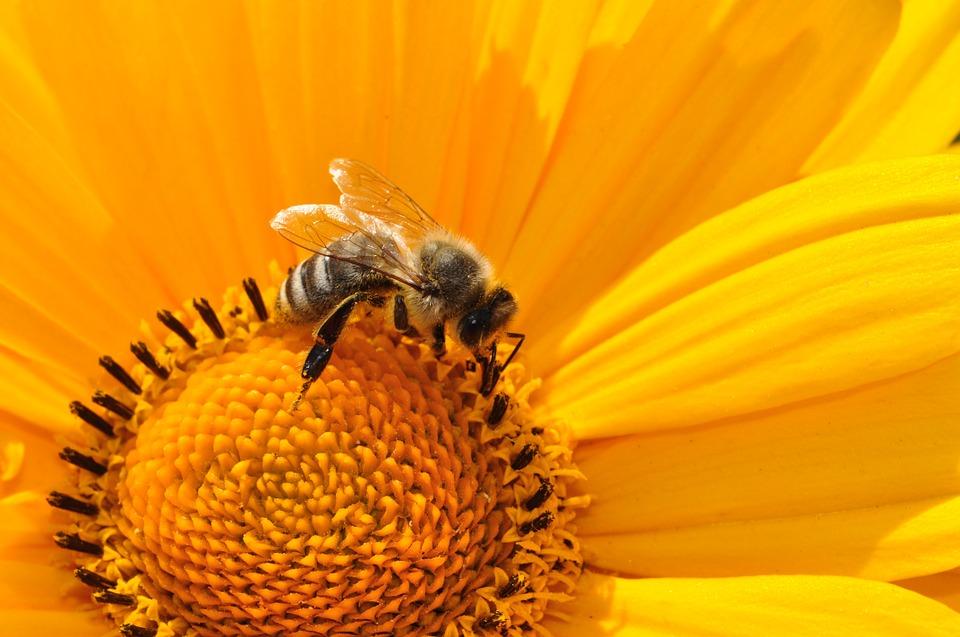 podsticaji za pčelare krediti pčelarima biodizel organska proizvodnja pčela leska u srbiji oksalna kiselina u smiraj dana