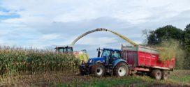 silaža cele biljke aflatoksin u silaži silaža dužina silaža kukuruz silaža cela biljka kiselost silaže