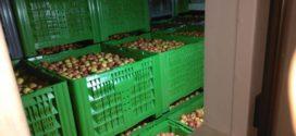 ugljen dioksid visoki kvalitet pollino agrar konkurs za delta agrar skladištenje jabuka jabuke u silosi hladnjače jabuka manje