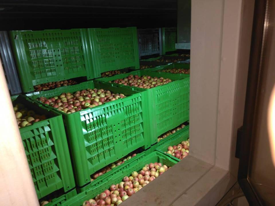 visoki kvalitet pollino agrar konkurs za delta agrar skladištenje jabuka jabuke u silosi hladnjače jabuka manje