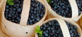 borovnica nova kina borovnice berba borovnica na tržištu