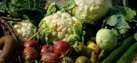 hrana baciti organsko povrtarstvo
