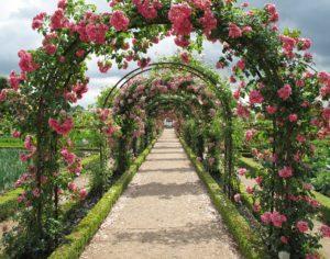 proizvodnja ruža zaštita