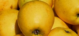 jabuka zlatni delišes savetovanje gruža
