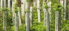 rak korena sadnja u martu kvalitet sadnica