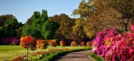 novosadska jesen sombor festival