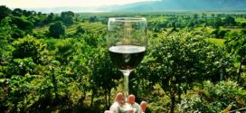 probus vino