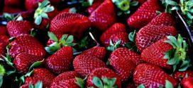izvoz jagode rode jagode uspešno